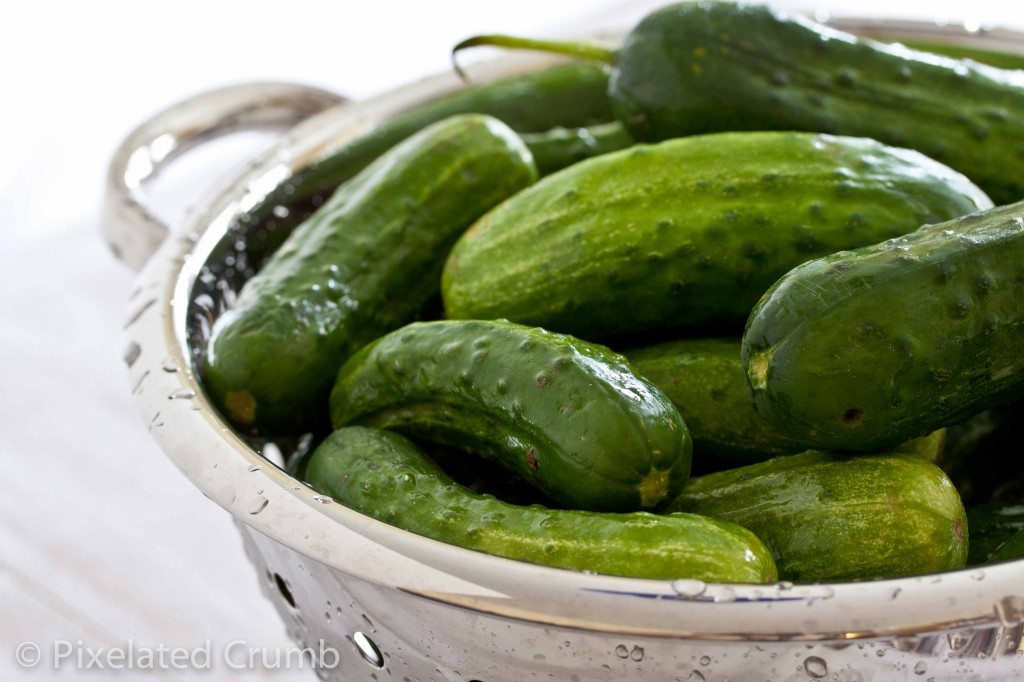 pickles 1 1024x682 spicy, crunchy dill pickles